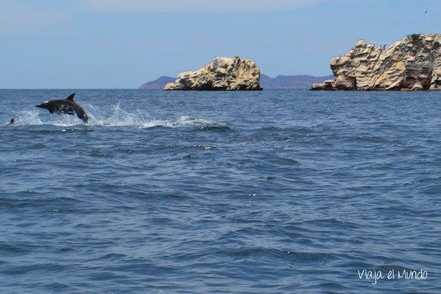 Los delfines alegran el paisaje