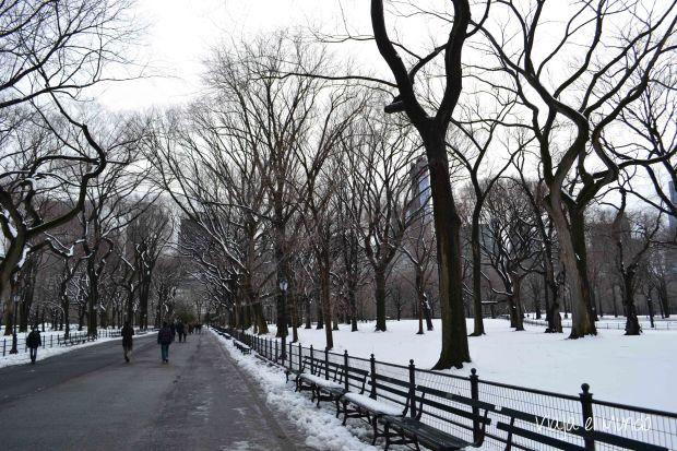 El paseo helado en el Central Park