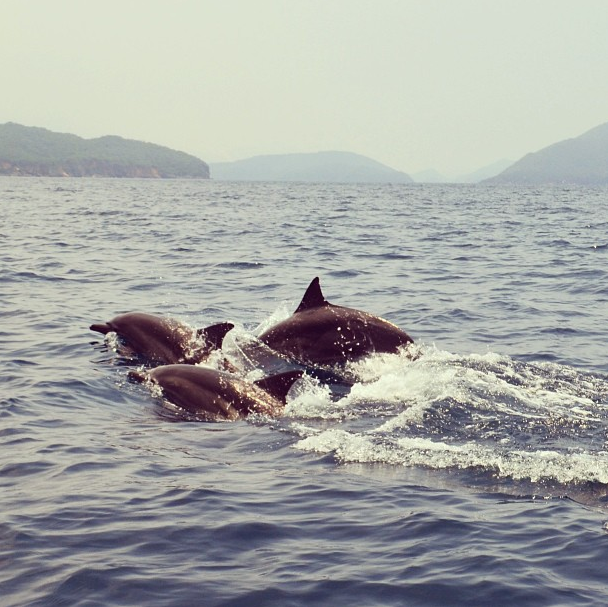La alegría de ver a los delfines en el Parque Nacional Mochima