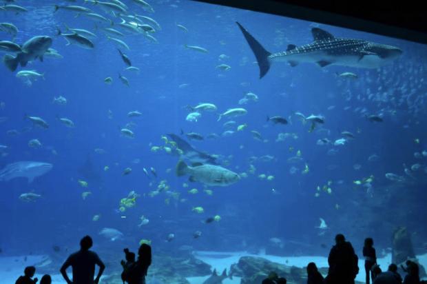 Pasé seis horas, seis, en el acuario de Atlanta