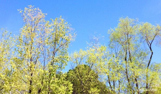 La Primavera, sin más