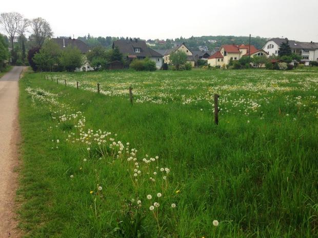 Así se ve Trierweiler